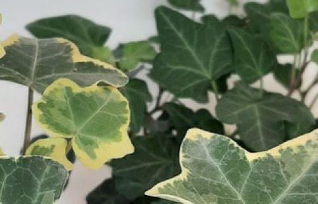 איך לגדל צמחים | ג'ונגל אורבני – הניסיון שלי